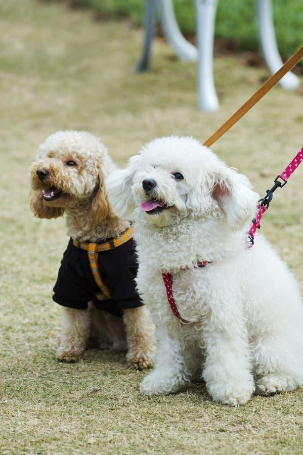 Twee aanbiddelijke honden stock afbeeldingen