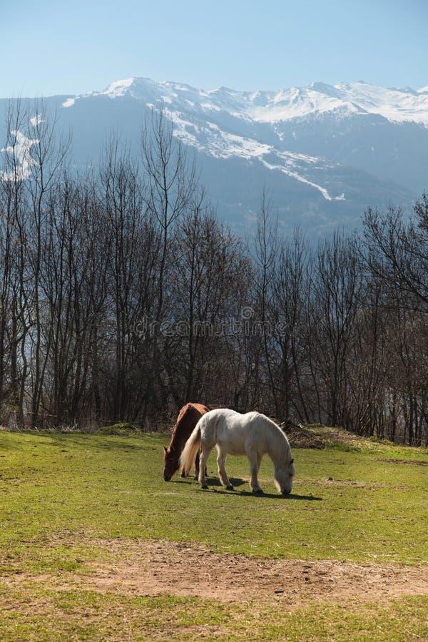 Twee alleen paarden op bergweide royalty-vrije stock fotografie