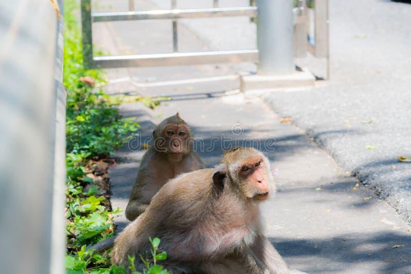 Twee apen kijken met verdenking royalty-vrije stock foto