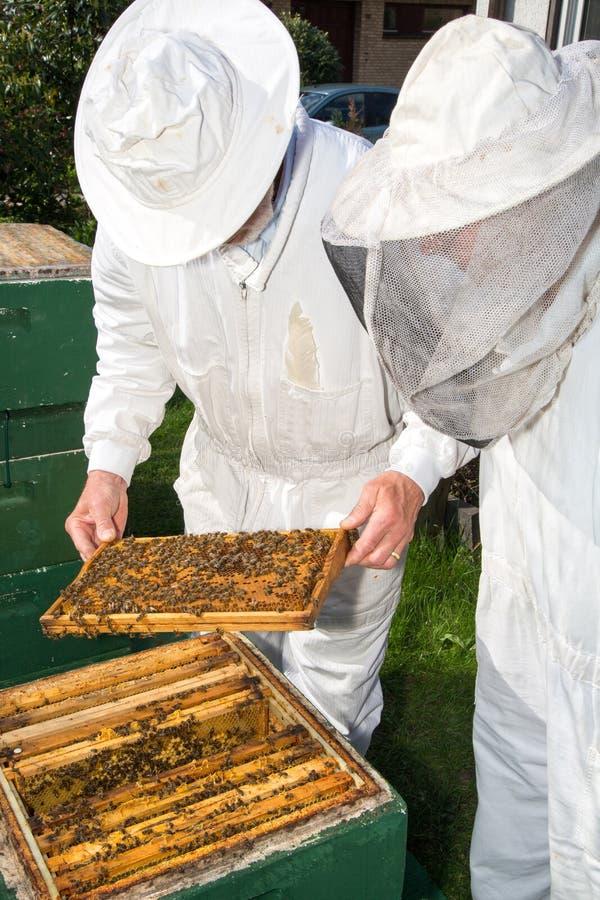 Twee beekeepers die bijenbijenkorf handhaven stock fotografie