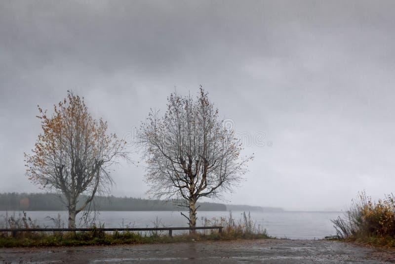 Twee Berkbomen door het Meer stock foto