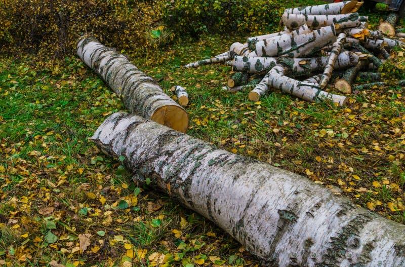 Twee berken die na het onweer vielen worden gesneden in brandhout royalty-vrije stock afbeelding