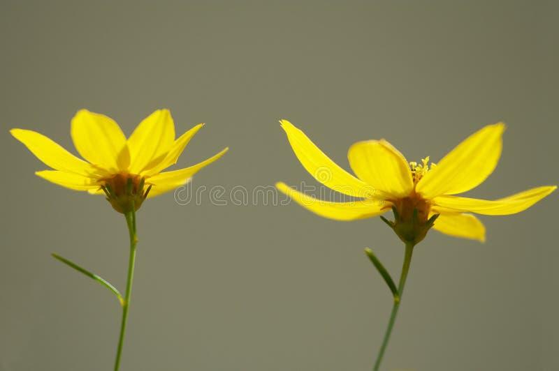 Twee bloemen stock fotografie