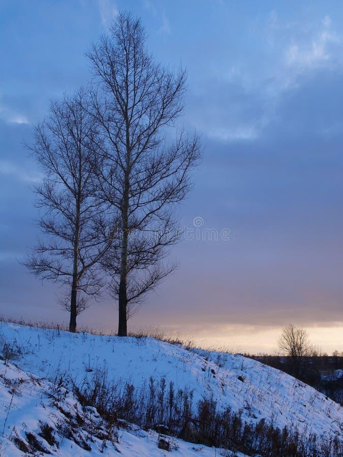 Twee bomen. royalty-vrije stock afbeeldingen