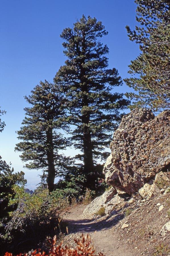 Twee Bomen & een Bolder stock afbeeldingen