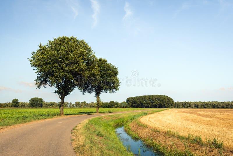 Twee bomen naast een gebogen landweg royalty-vrije stock afbeelding