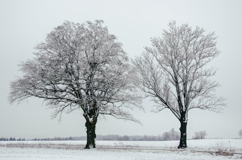 Twee bomen in sneeuw royalty-vrije stock fotografie