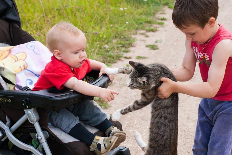 Twee broers ontmoetten een wilde kat tijdens een gang in het land stock foto