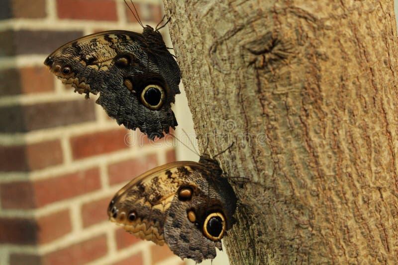 Twee butterflys stock foto