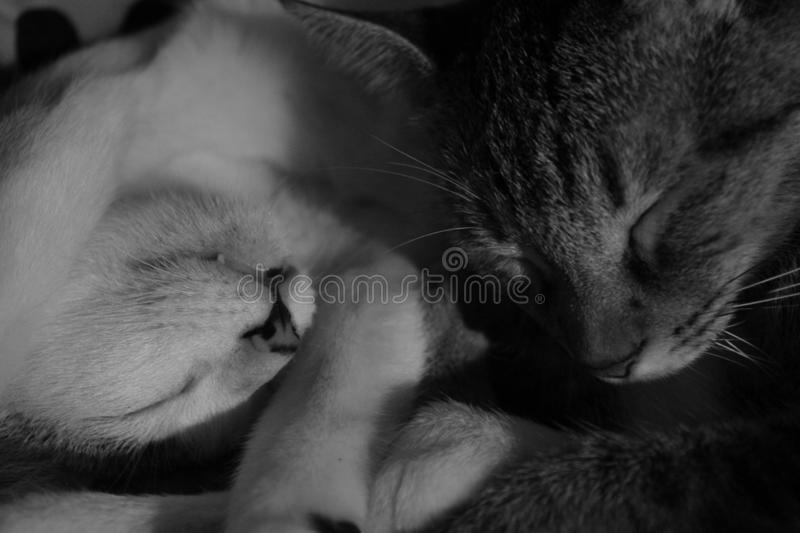 Twee Cat Snuggle Up For Warmth royalty-vrije stock fotografie