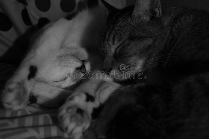 Twee Cat Snuggle Up For Warmth stock foto's