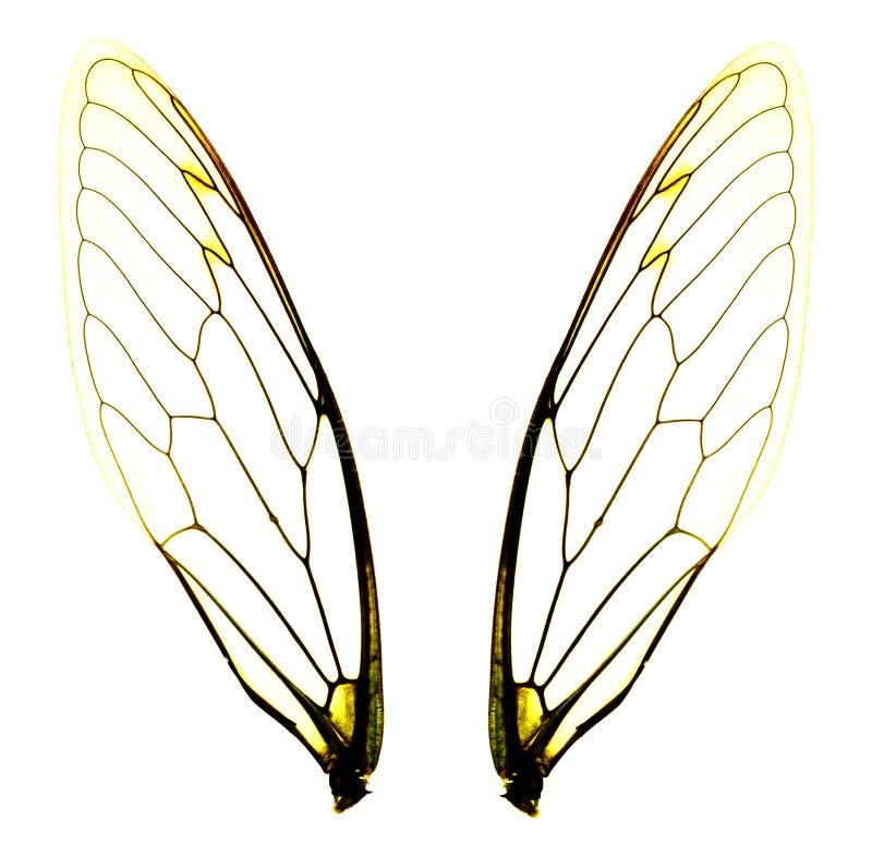 Twee cicadevleugels royalty-vrije stock foto's