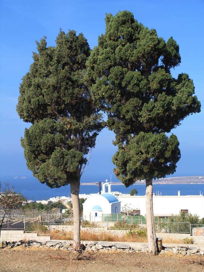Twee cipresbomen stock afbeeldingen