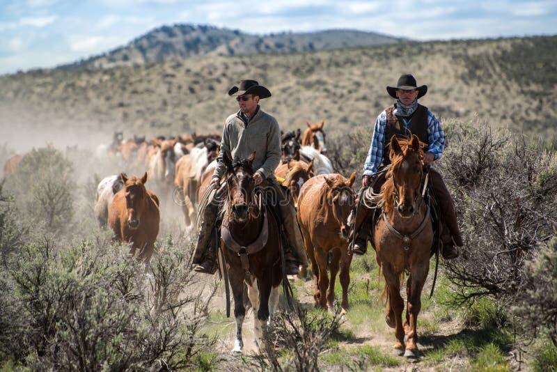 Twee cowboys leiden de paardkudde op jaarlijkse sleepaandrijving 1 Mei, 2016 Craig, COrive-verzameling royalty-vrije stock foto