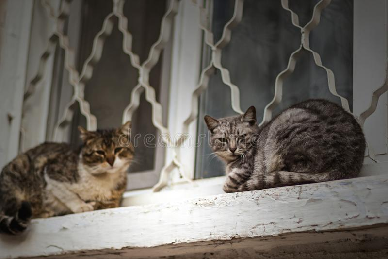 Twee dakloze katten zitten op witte venstervensterbank royalty-vrije stock foto