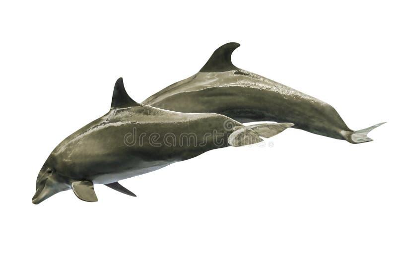 Twee dolfijnen het springen royalty-vrije stock foto