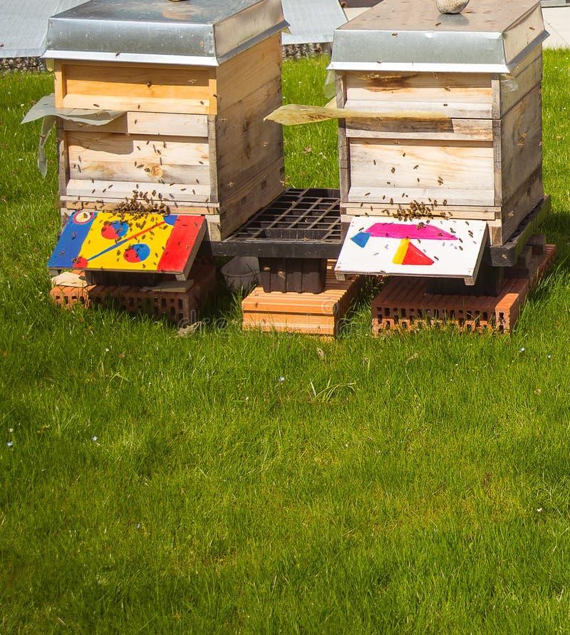 Twee dozen met honingbijkolonies stock afbeelding