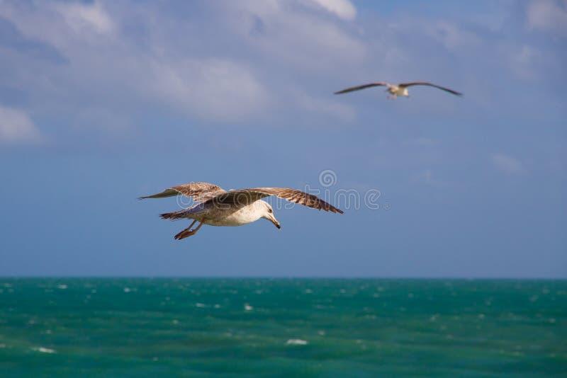 Twee duiven royalty-vrije stock foto