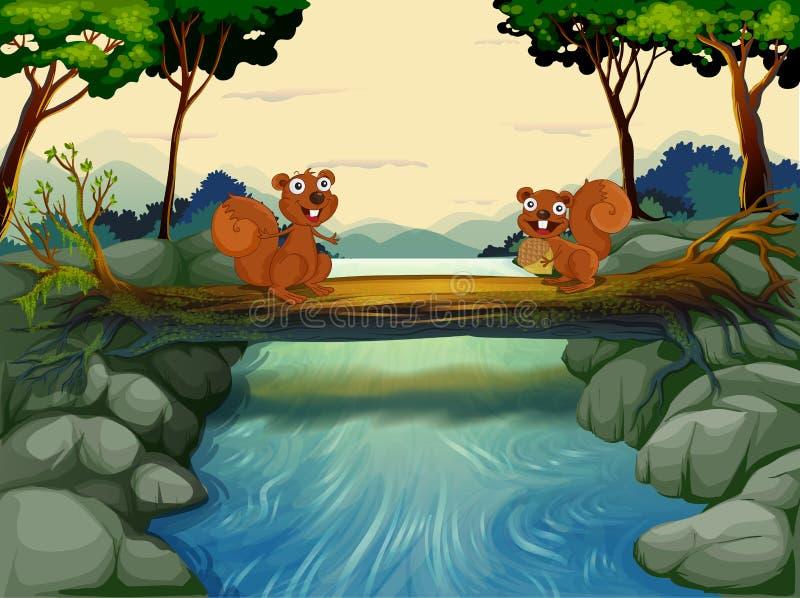 Twee eekhoorns bij de rivier stock illustratie