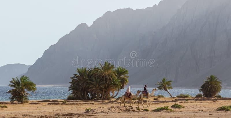 Twee Egyptische meisjes die kamelen berijden berijden langs de kust van het Rode Overzees in Egypte Dahab royalty-vrije stock afbeeldingen