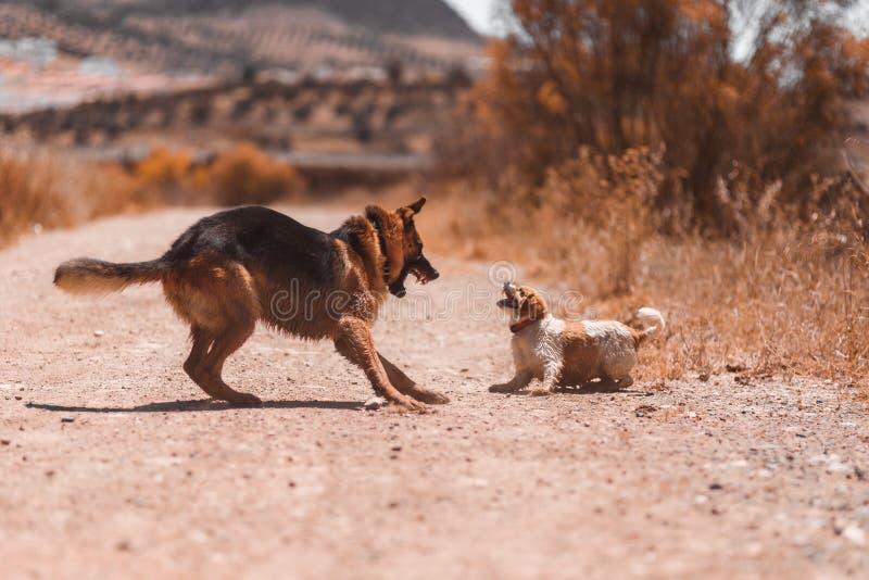 Twee en honden die vechten spelen stock afbeelding