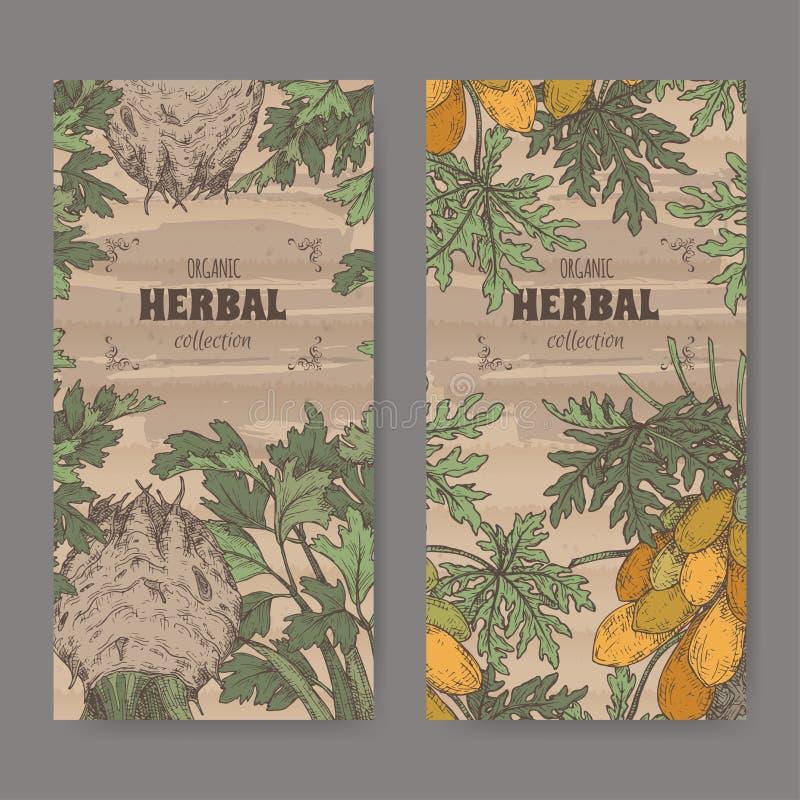 Twee etiketten met de selderie en carica de papajaboom van apium graveolens aka van papajaaka kleuren schets Groene apothekerreek stock illustratie
