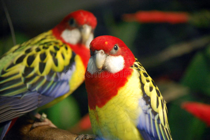 Exotische Vogels royalty-vrije stock foto's