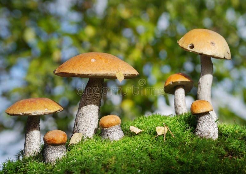 Twee families van paddestoelen in het bos, fantasie royalty-vrije stock fotografie