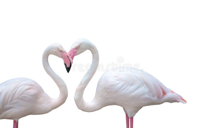 Twee flamingovogels op witte achtergrond die hun hals combineren stock foto's
