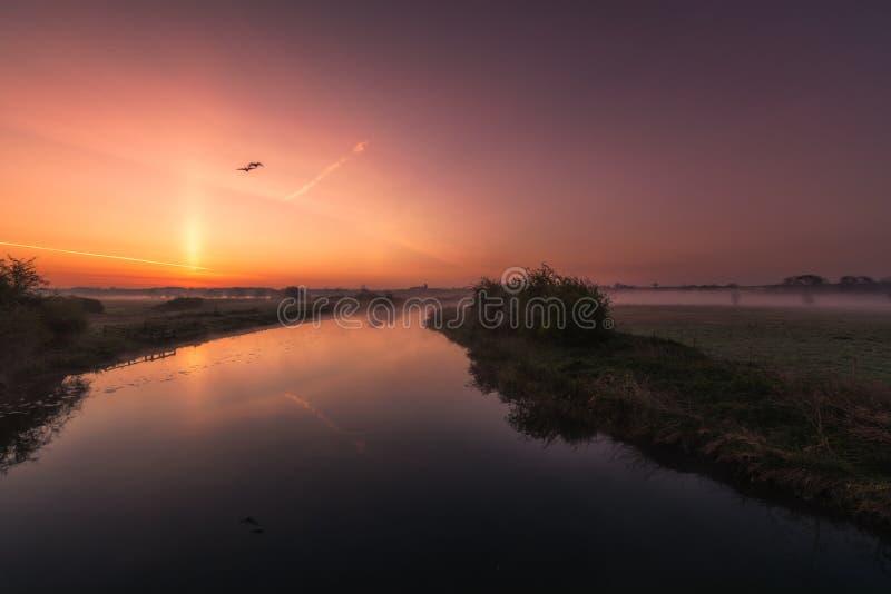 Twee ganzen die over een nevelige rivier Nene bij zonsopgang vliegen royalty-vrije stock afbeelding