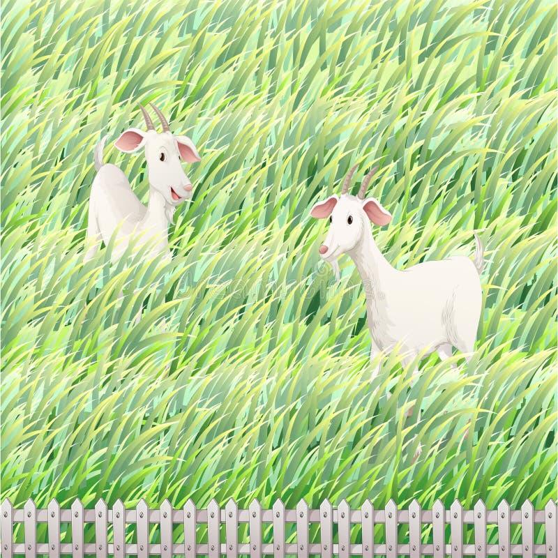 Twee geiten in het landbouwbedrijf vector illustratie
