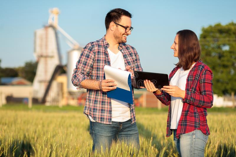 Twee gelukkige jonge mannelijke en vrouwelijke landbouwers of agronomen die een tarwegebied inspecteren vóór de oogst royalty-vrije stock foto