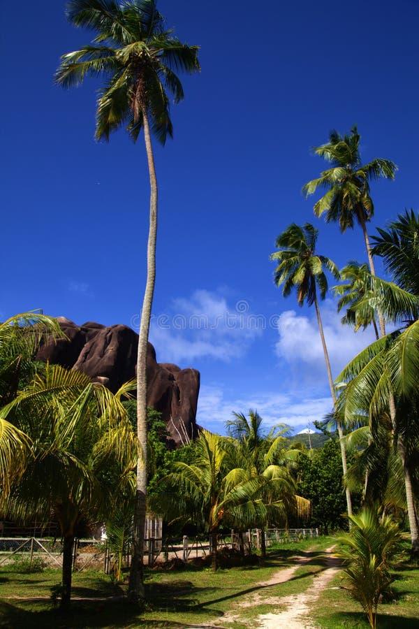 Twee gevolgde weg onder torenhoge palmen royalty-vrije stock afbeeldingen