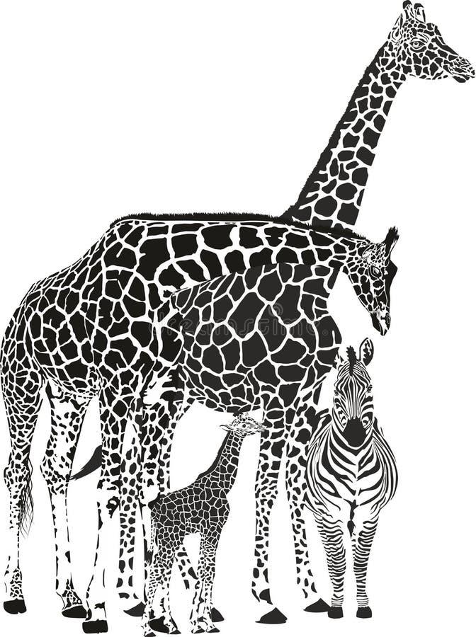 Twee giraffen en twee zebras stock illustratie