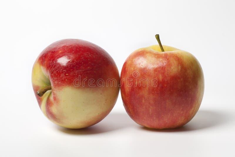 Twee glanzende appelen Elstar royalty-vrije stock foto