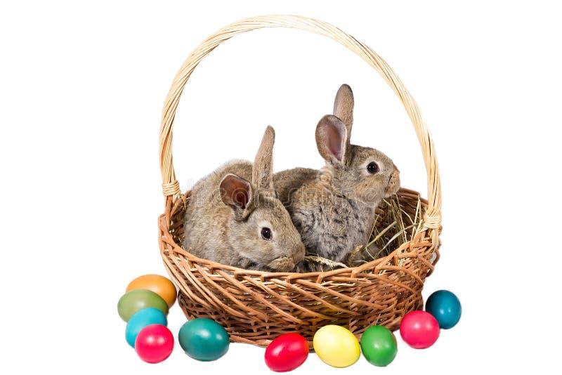 Twee grijze konijntjes van Pasen in een mand met eieren, isoleren stock foto