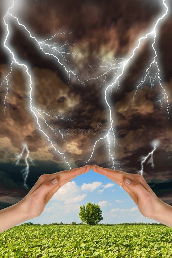 Twee handen bewaren een groene boom royalty-vrije stock fotografie