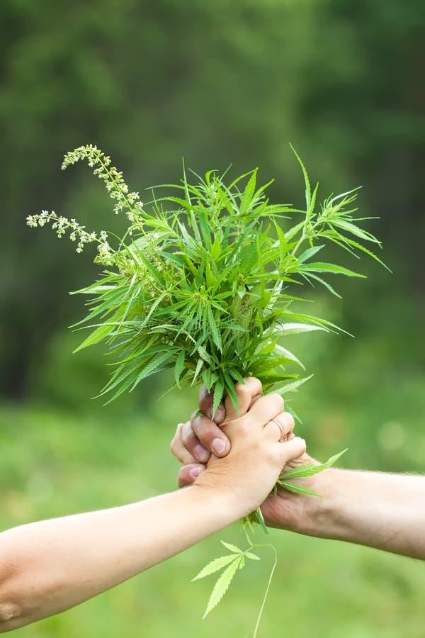 Twee handen die cannabis houden stock foto's