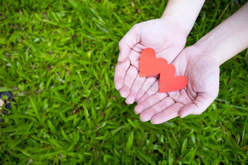 Twee handen die twee rode harten op groen gras houden stock foto