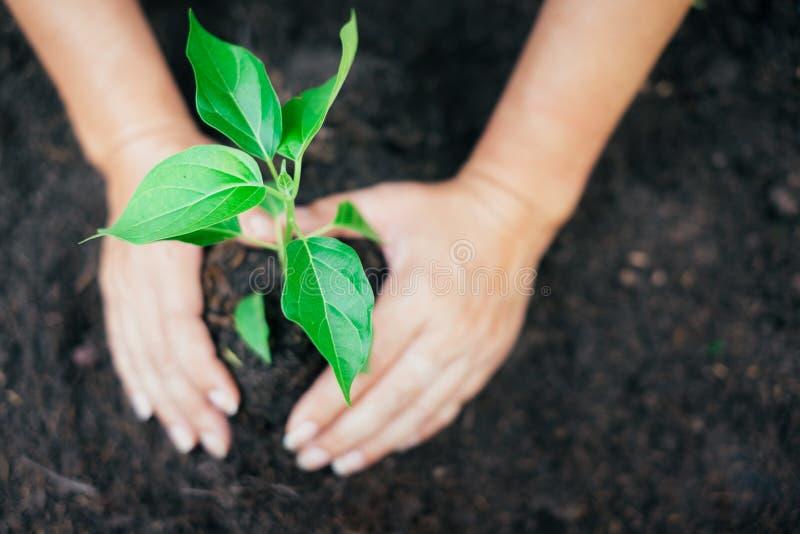 Twee handen hielden te planten zaailing stock afbeelding
