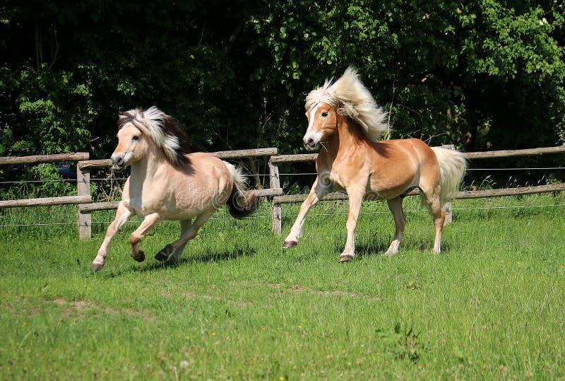 Twee het lopen paarden royalty-vrije stock afbeeldingen