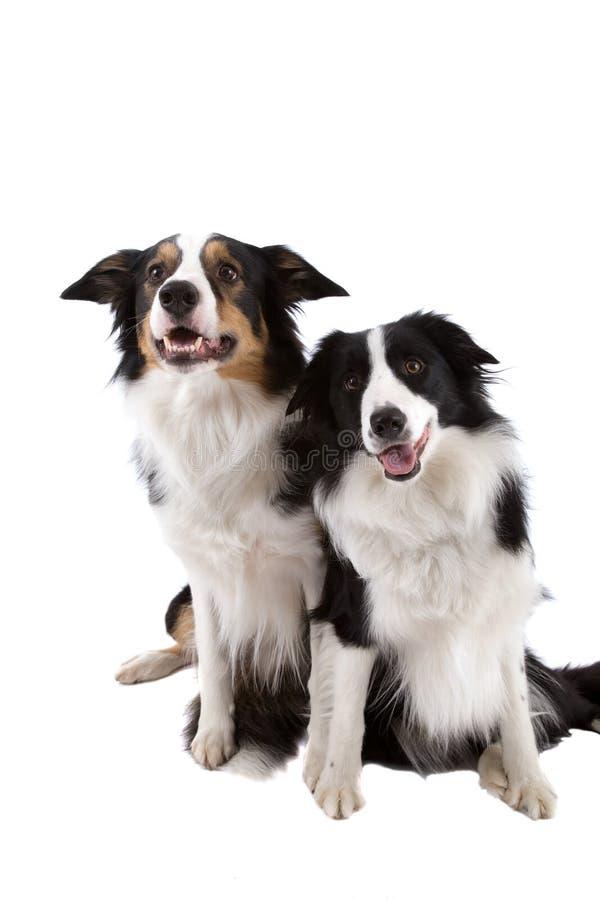 Twee honden royalty-vrije stock afbeeldingen