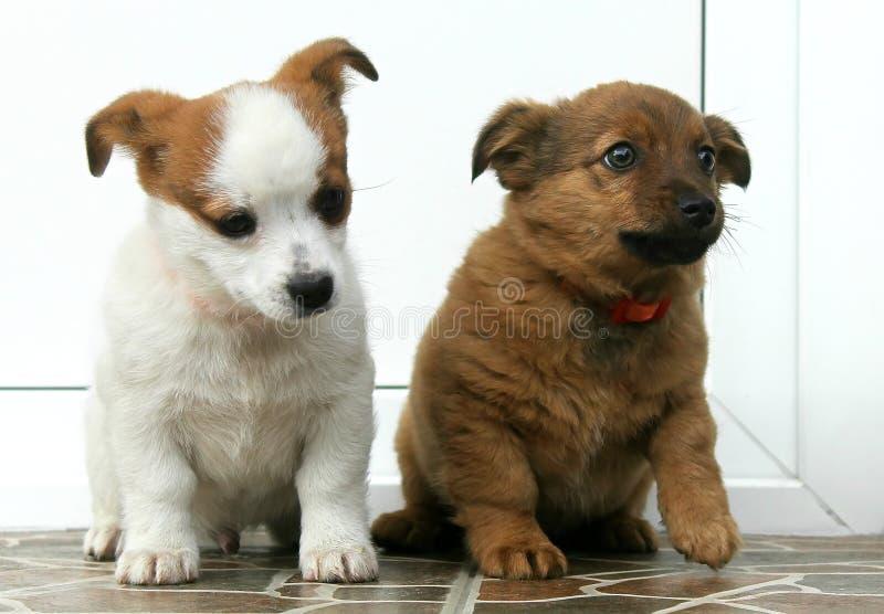 Twee honden royalty-vrije stock foto's