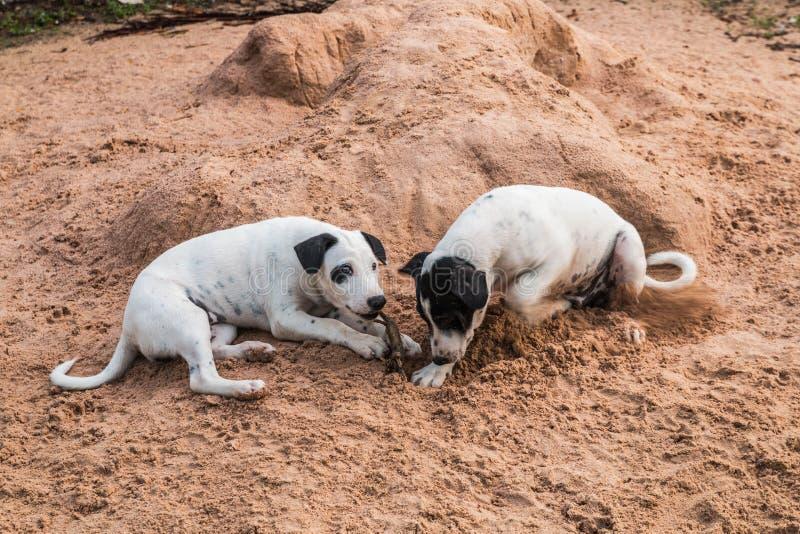 Twee Honden stock foto