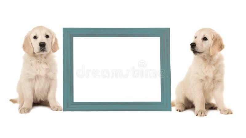 Twee honden die van het golden retrieverpuppy naast een blauwe lege omlijsting zitten royalty-vrije stock afbeelding