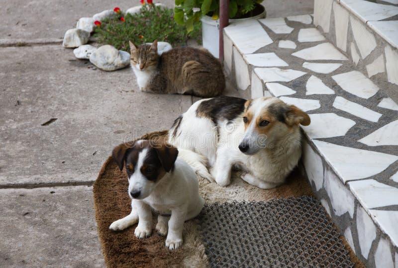 Twee honden en één kat stock afbeeldingen