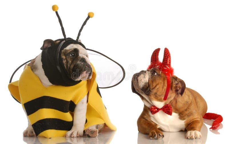 Twee honden gekleed voor Halloween royalty-vrije stock foto
