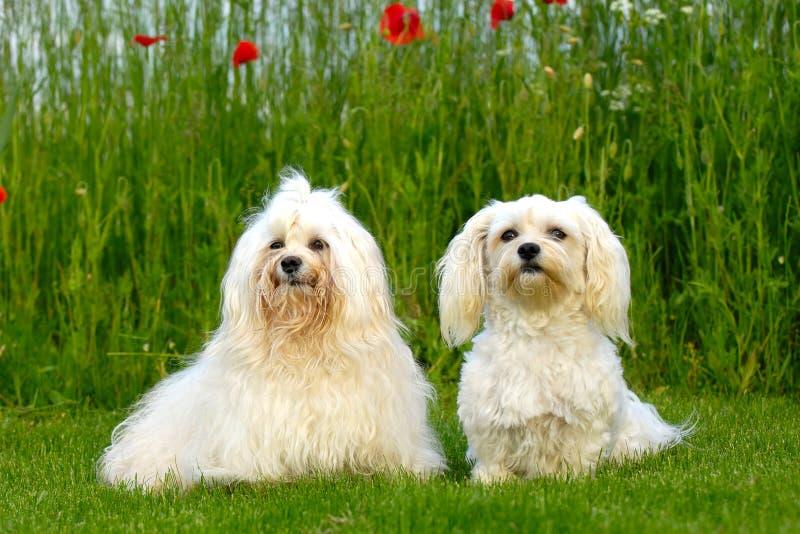 Twee honden in natur royalty-vrije stock foto's