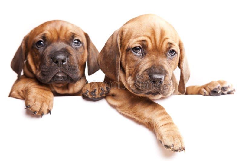 Twee honden verzenden een bericht! royalty-vrije stock fotografie