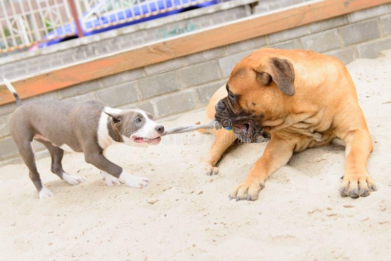 Twee hondenspel royalty-vrije stock afbeelding